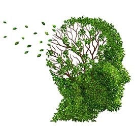 Hearing & the brain